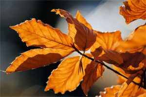 Ayurveda in de herfst